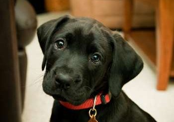 Кучета надушват рак на белия дроб