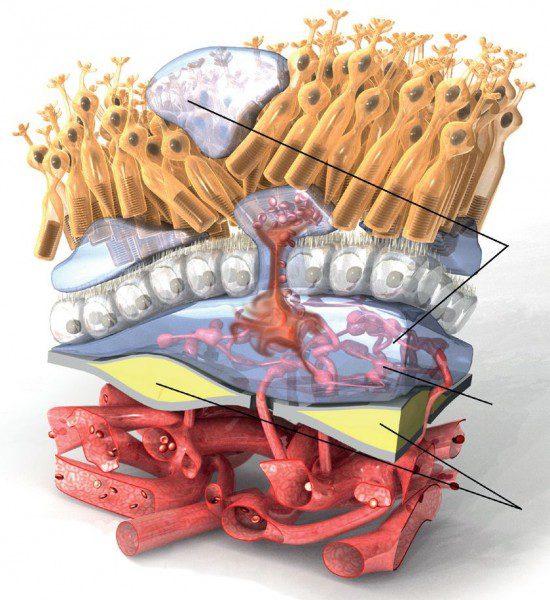 Инжекция в окото спира форма на макулна дегенерация