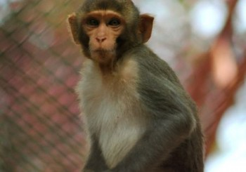 Разгадаха разликите между човека и маймуната