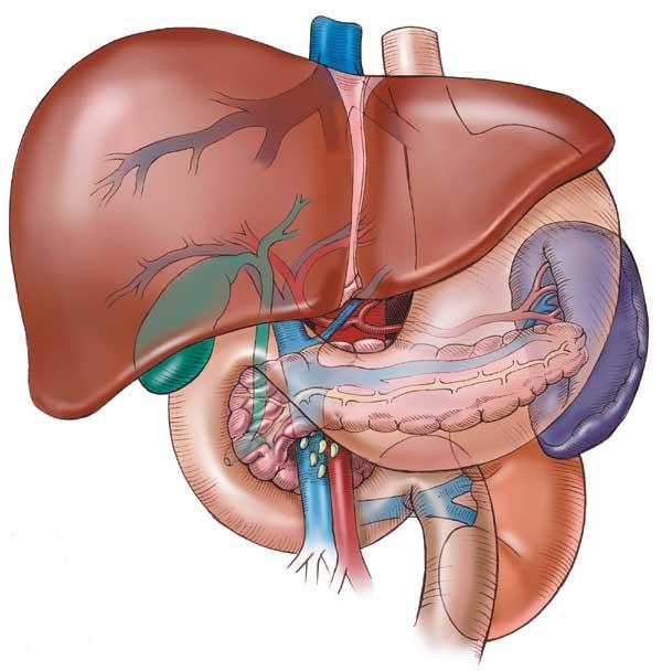 хепатит черния дроб цироза симптоми