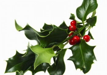 Коледният имел е мощно оръжие срещу рака