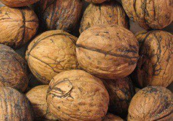 Обикновените орехи пазят от рак на дебелото черво