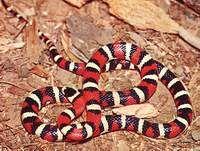 Змия нахапа две деца в Пловдив и ги прати в клиника