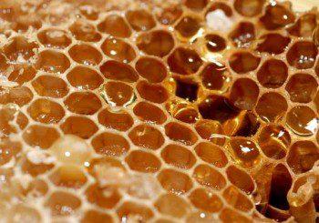 Медът пази зъбите от кариеси