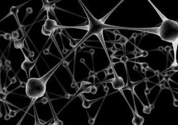 Откритие: Туморите на мозъка се хранят с мазнини, не със захар