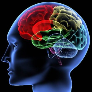 мозък шизофрения