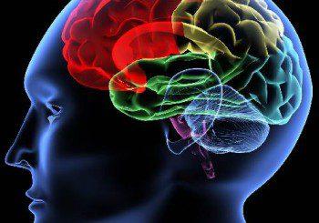Мозъкът може да възстановява неврони след инсулт