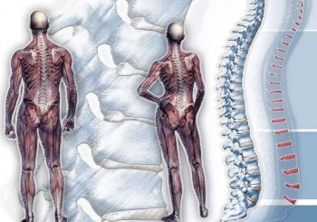 Безплатни прегледи в Пирогов за гръбначни изкривявания