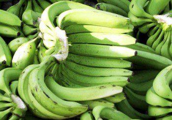 Неузрелите банани помагат да отслабнем