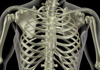 Човек може да регенерира някои части от тялото си