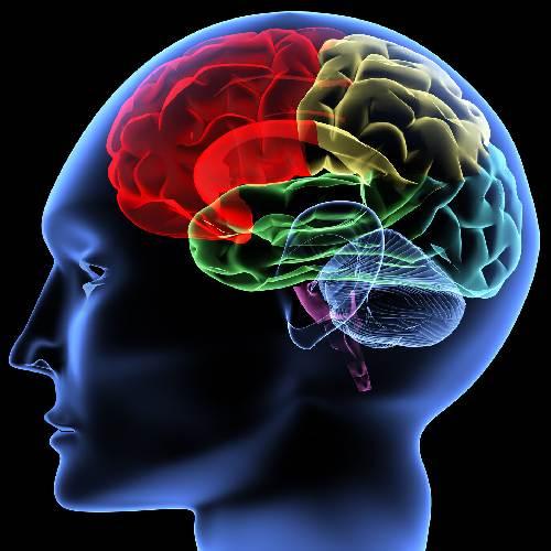 мозък
