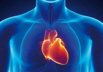 Цинкът е много важен за работата на сърцето
