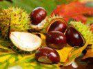 Кестените – богати на витамини и лечебни