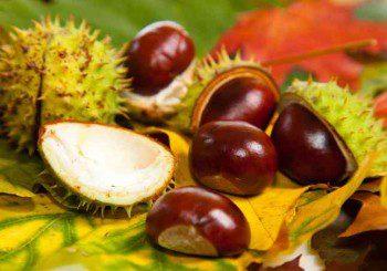 Кестените - богати на витамини и лечебни