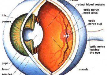 Симптоми и лечение на диабетната ретинопатия