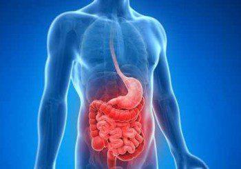 Гъбички са виновни за симптомите при болестта на Крон