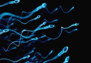 Сперматозоидите на мъжете намалели наполовина за 40 г.