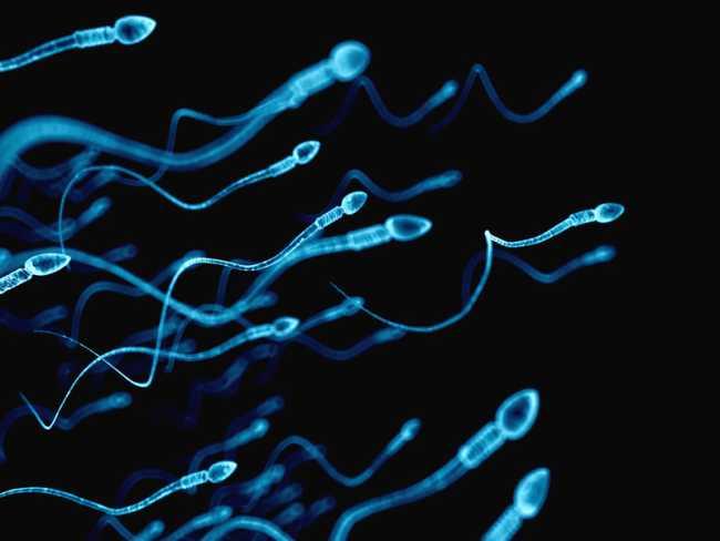 сперма сперматозоиди изследване