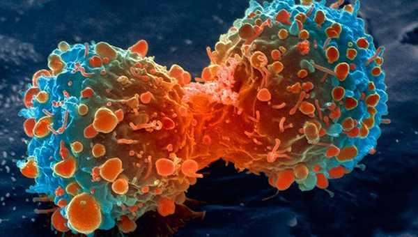 рак ракова клетка