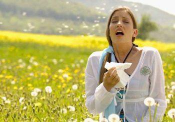 Датски учени откриха антитяло, което може да спре почти всяка алергия
