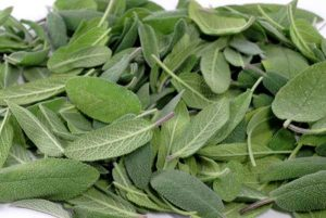 салвия - градински чай