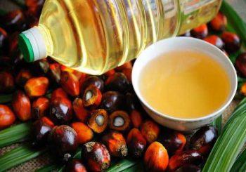 Палмовото масло - къде го слагат и защо е вредно