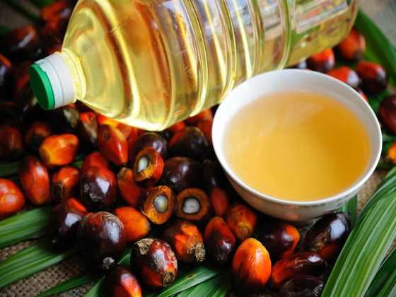 палмово масло вредно