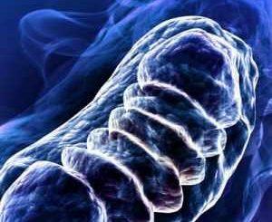 Учени откриха вещество, което подмладява артерии с 20 г.